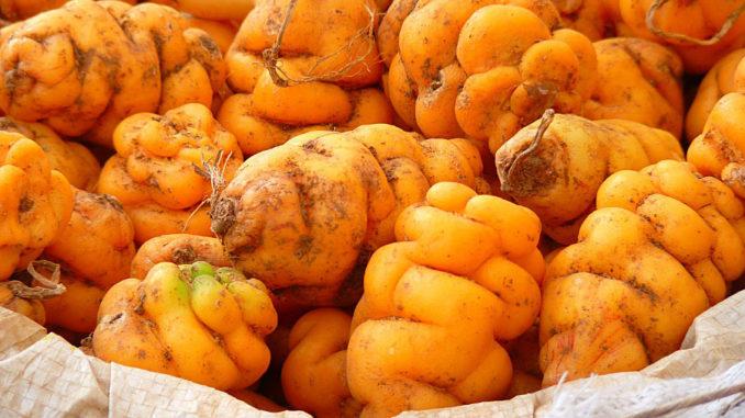 Перу, национальный день картошки